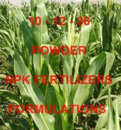 10 - 12 - 36 POWDER FOLIAR AND DRIPPING NPK FERTILIZER FORMULATIONS AND MANUFACTURING PROCESSES
