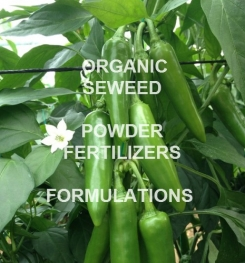 ORGANIC POWDER SEAWEED FERTILIZERS FORMULATIONS AND PROCESS