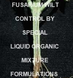 Fusarium Wilt Plants Treatment by Special Organic Liquid Mixture Formulations And Production Process