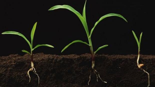 Liquid soil ph regulator manufacturing formula and methods for Soil encyclopedia